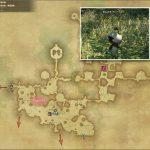 マンドラゴラ - 黒衣森:東部森林の敵生息場所とドロップ素材(FF14 敵素材マップ:新生エリア)