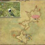 タイニー・マンドラゴラ - 低地ラノシアの敵生息場所とドロップ素材(FF14 敵素材マップ:新生エリア)
